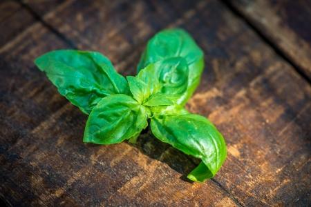 Friss zöld bazsalikom Vértes friss bazsalikom levelek a régi, fából készült asztal