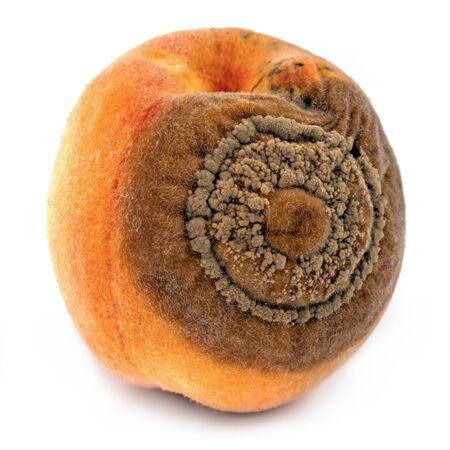 Peaches disease Monilia on peach fruit, macro detail - isolated on white  Stock Photo