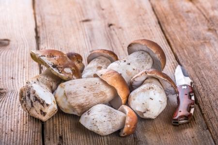 delikatesse: Porcini Mushroom lying on a Wooden Table