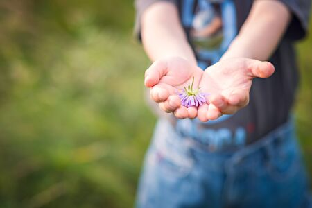 flowers field: Little Boy Holding Flower