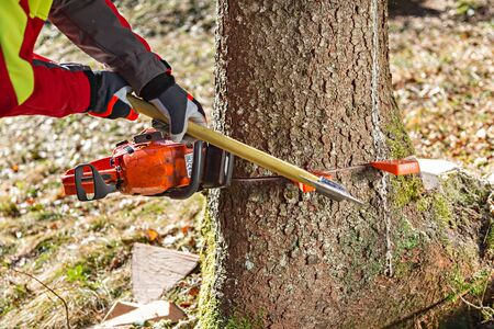 tree felling: Felling the tree