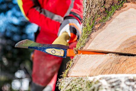 A fa kivágása Stock fotó