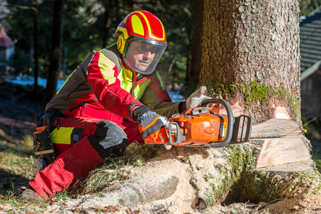 Lumberjack logger worker in protective gear cutting firewood timber tree in forest with chainsaw Imagens