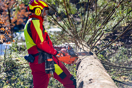 Lumberjack logger worker in protective gear cutting firewood timber tree in forest with chainsaw Stock fotó