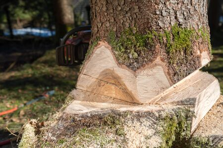 hand tree: Felling the tree