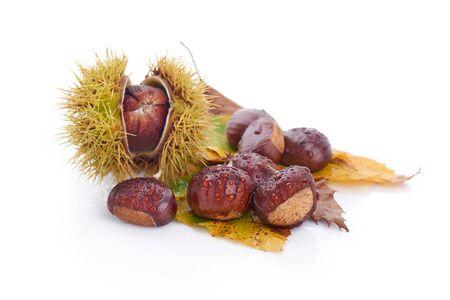 Fresh chestnuts, isolated on white background