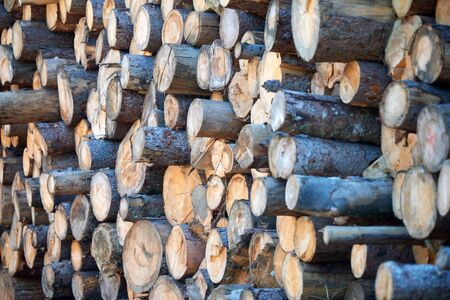 Stacked logs and woodpiles, lumber and wood industry