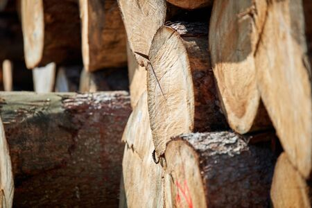 Stacked logs and woodpiles, lumber and wood industry Banco de Imagens