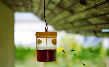 Wasp, hornet and yellowjacket trap hanging outdoors