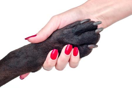 犬と少女白い背景の上の友好的な握手