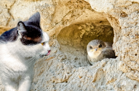 a cat hunts on a bird sitting in a nest photo