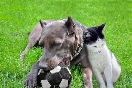 Dog with a cat play a ball on a grass photo