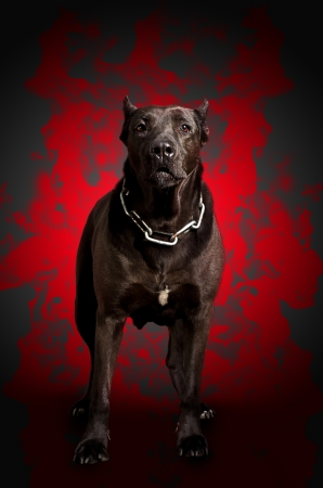 Black warrior dog stands in the red fire photo