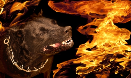 conflagrant: Portrait of a dog with a wicked grin growl in flames