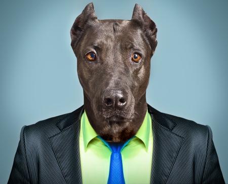 ビジネス スーツに犬の肖像画