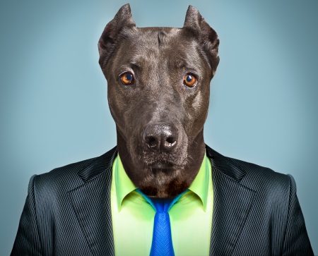 Portrait of a dog in a business suit photo