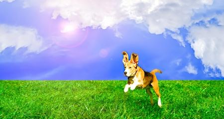 hintergrund himmel: Spielerisch niedlichen Hund springt auf einer Wiese Lizenzfreie Bilder