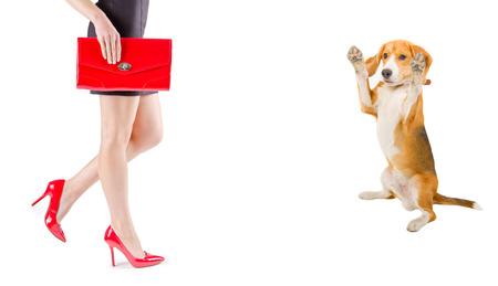 bewonderen: Hond bewonder de schoonheid van de vrouwelijke benen