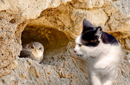 Cat hunts on a bird in nest Stock Photo