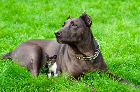 Dog with a kitten lying on the grass Stock Photo