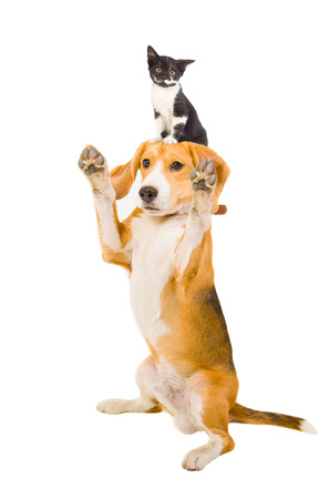 Playful dog with a kitten on the head photo