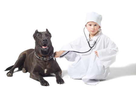 Little vet listens to a stethoscope dog photo