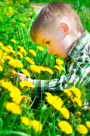 Beautiful boy on meadow surrounded by dandelions photo