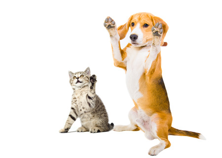 Portrait of a kitten and dog with raised legs photo