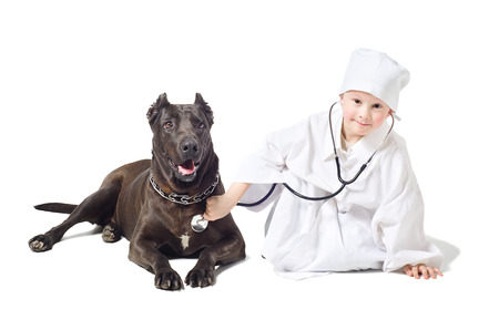 Small vet listens to a stethoscope dog photo
