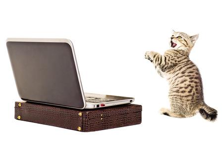 Amazed kitten before a laptop isolated on white background photo