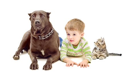 Dog, boy and kitten lying on white background photo
