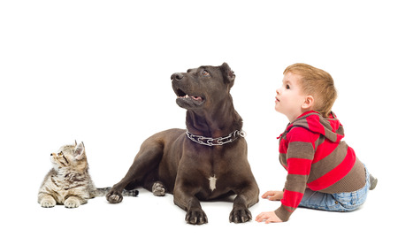 Boy, dog and kitten together looking up isolated on white background photo