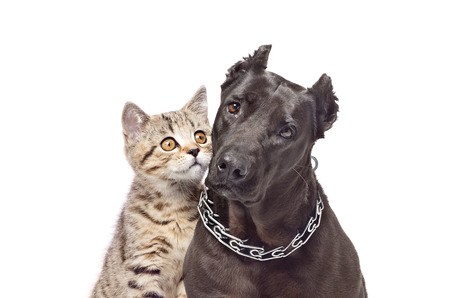 Portrait of a dog and a kitten huddled together photo