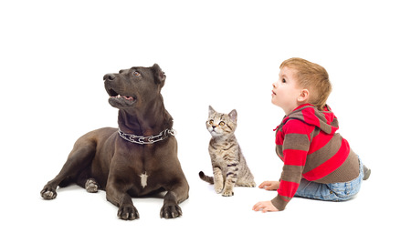 Boy, dog and kitten sitting together looking up photo