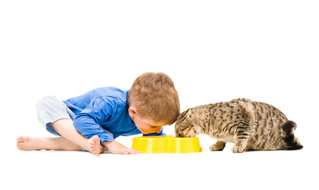 Boy and cat eating from the same bowl isolated on white background photo