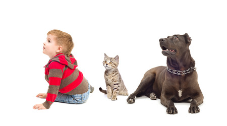 Boy, kitten and dog sitting together looking up photo