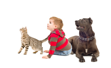 black and white pit bull: Cat, boy and dog together looking up