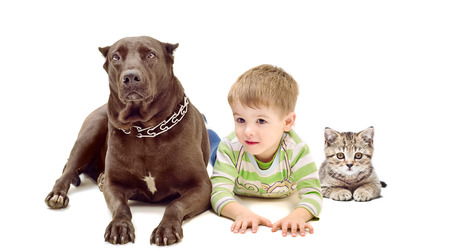 Dog, boy and kitten lying together isolated on white background photo