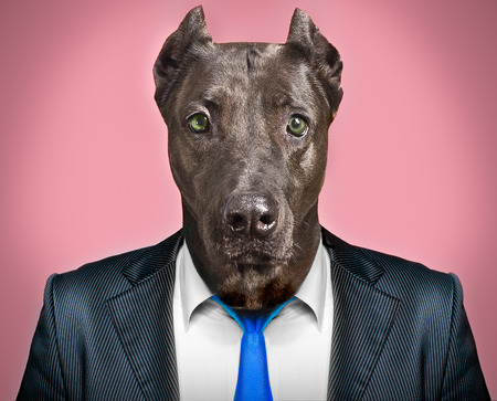 Portrait of a dog in a business suit Stock fotó - 29120187
