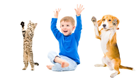 dog cat: Cheerful boy, dog and cat  together with hands raised Stock Photo
