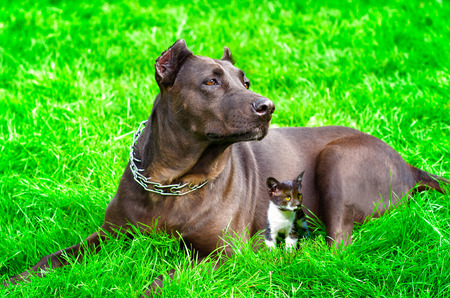 Dog with a kitten lying together on the lawn photo