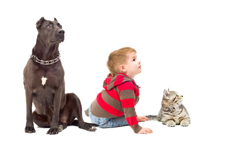 Boy, dog and kitten together looking away photo