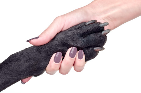 Friendly handshake of woman and dog isolated on white background