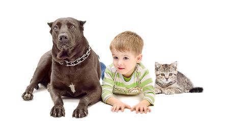 Dog, boy and kitten lying together  isolated on white background photo