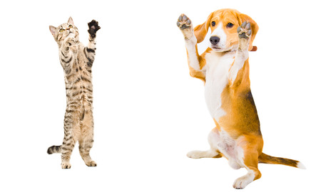 Cat and dog together standing on his hind legs