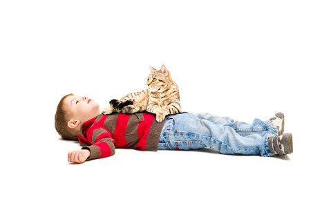 scottish straight: Portrait of a cute boy and a cat lying on it