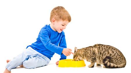 scottish straight: Cute boy feeds the cat Scottish Straight