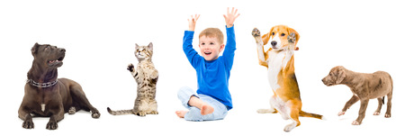 Group of a cheerful pets and child together