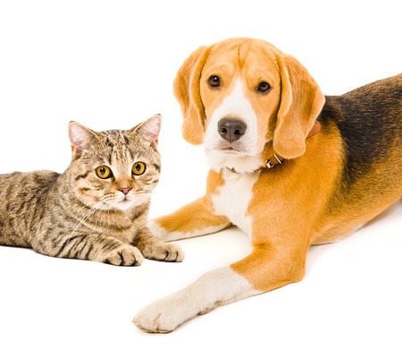 Portrait of a dog and a cat lying together photo