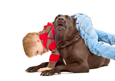 Beautiful boy playing with the dog breed Staffordshire Terrier Stock Photo